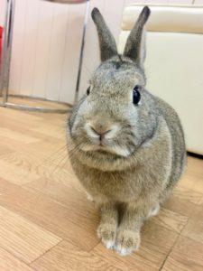 【 Rabbit Mother's Day】うさびびからのお知らせ10