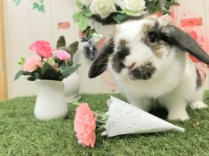 【 Rabbit Mother's Day】うさびびからのお知らせ4