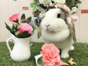 【 Rabbit Mother's Day】うさびびからのお知らせ7