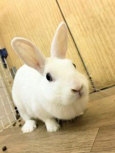 【 Rabbit Mother's Day】うさびびからのお知らせ15