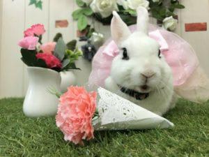 【 Rabbit Mother's Day】うさびびからのお知らせ1