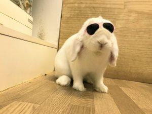 紫外線には、うさぎサングラス?2