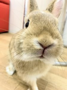 【 Rabbit Mother's Day】うさびびからのお知らせ16