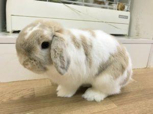 【 Rabbit Mother's Day】うさびびからのお知らせ13
