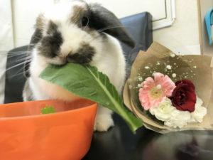 うさぎさんに花束を!4