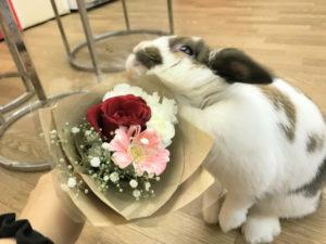 うさぎさんに花束を!2