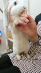 当該ねこカフェにて発生したとされる猫パルボウイルスについて2