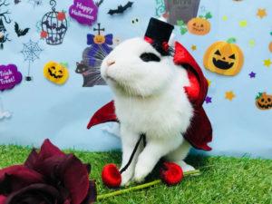 【ハロウィン】2018年版うさびびのハロウィンラミカが完成しました!5