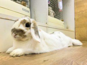 rabbithotel3262
