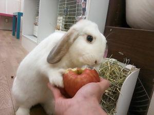 立ってりんごを食べるミッシュちゃん