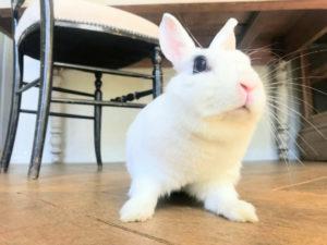 うさぎカフェ うさぎ専門店White Rabbit