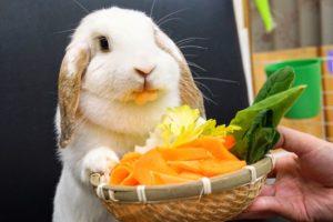 野菜のCM