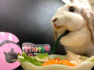 ミッシュちゃんの誕生日