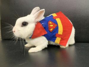 スーパーマン2