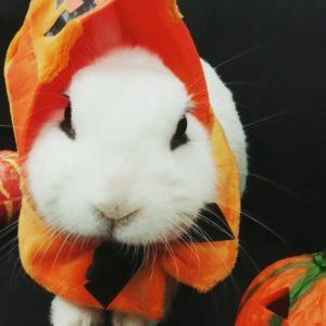 びびかぼちゃ