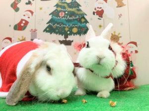 もうすぐクリスマス!4