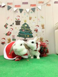 もうすぐクリスマス!5