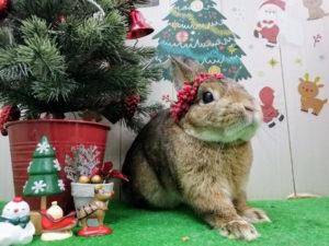 クリスマスすだち
