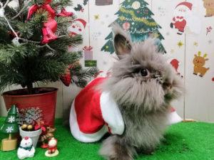 クリスマスちょこ