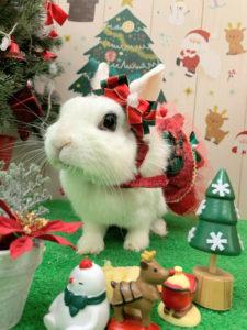 クリスマスびび2