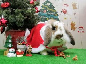 クリスマスみけ