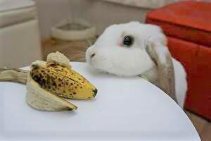 バナナをみつめるミッシュちゃん